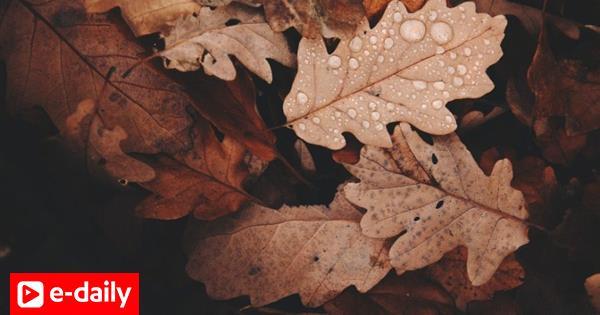 10 τραγούδια για την ομορφιά του φθινοπώρου